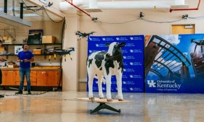 Researchers at the University of Kentucky are developing an autonomous drone system to monitor cattle health in pasture. The drones will capture indicators like heart rate, body temperature and weight. Tyler Lizenby/CNET